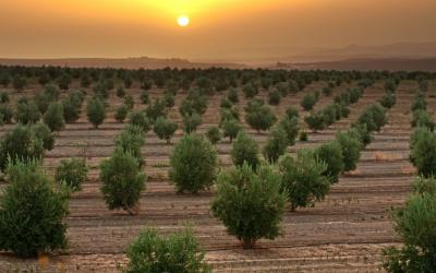 Iniciativa sustentável da Binding Site poupa 14 árvores do planeta em um ano