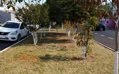 Binding Site adota áreas verdes em São Carlos